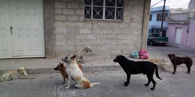 En lo que va del año, 120 canes sacrificados por enfermedades en Mineral de la Reforma