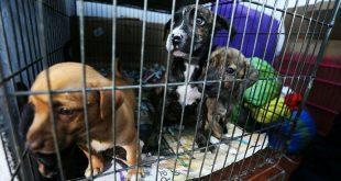 Arresto y multas por maltrato o descuido de animales en Mineral de la Reforma