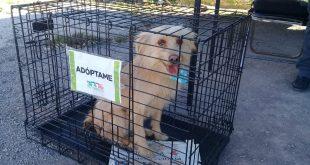 Por maltrato animal en Tulancingo, 106 denuncias en 2018