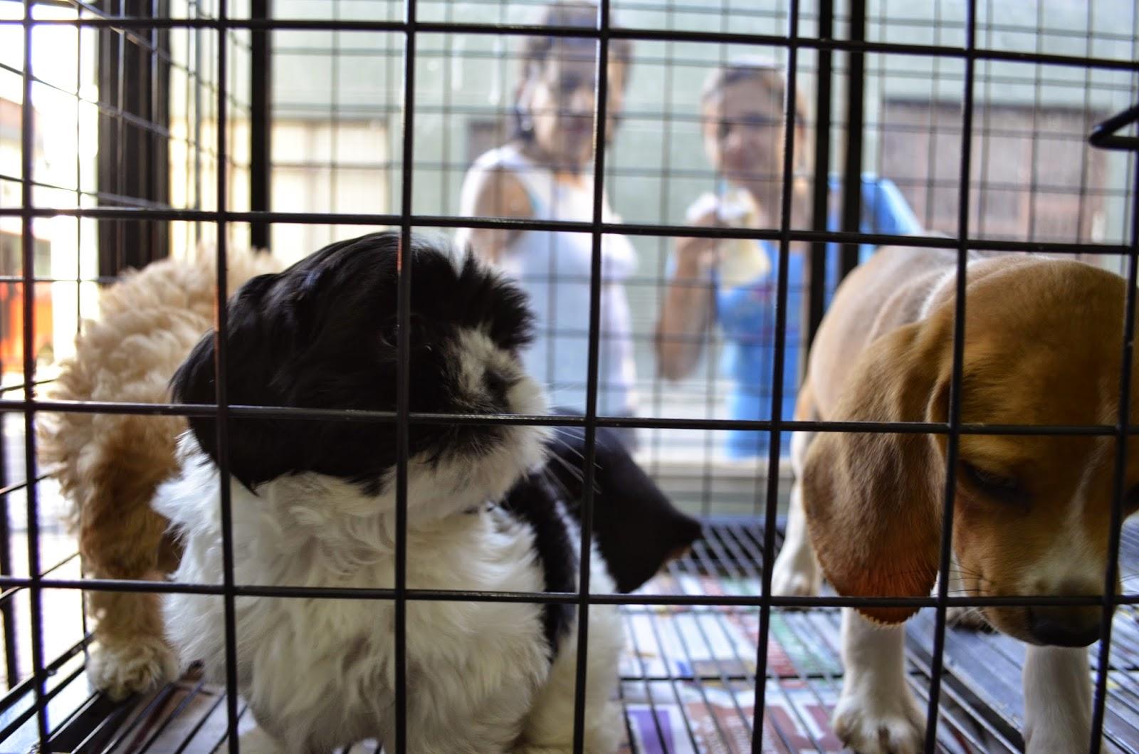 Arresto y multa de $24 mil, en Pachuca, por maltrato animal