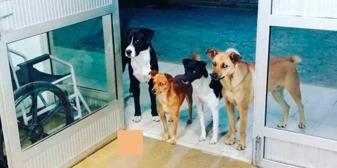 Así esperaron estos perritos a su amo afuera de un hospital