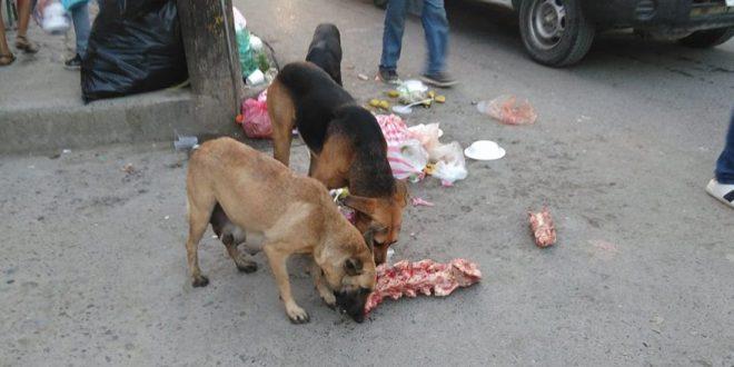 Piden castigo a carniceros que tiran desechos en las calles
