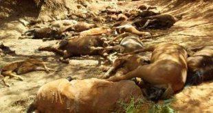 Mueren 40 caballos por ola de calor en Australia