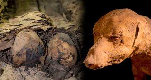 Localizan al menos 40 momias en Egipto