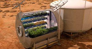 Georgia quiere plantar viñas ¡en Marte!