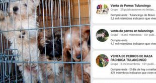 Pese a veto, sigue venta de mascotas en redes sociales