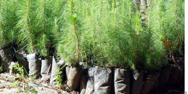 reforestación cdmx